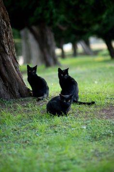 Meow - three black cats!