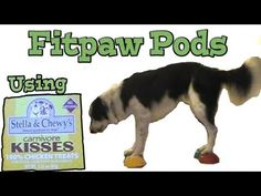 FitPAWS for fitness and FUN!