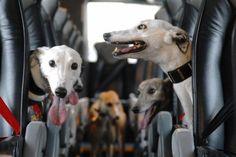 Greyhound bus! :-)