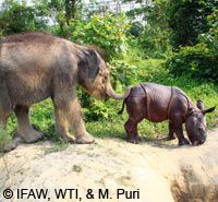 Return Orphaned Elephants & Rhinos to the Wild at The Rainforest Site