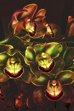 Orchid Hype by Bill Tiepelman, via 500px