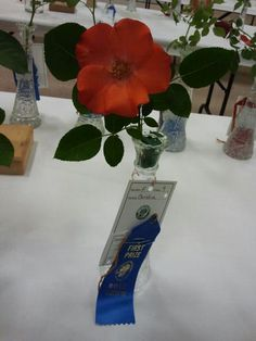 another wonderful Blue Ribbon won with Authentic Haven Brand fed roses by rosarians Chris and Tina VanCleave at the 60th annual Birmingham Rose Show 2012