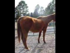 NEGLECTED HORSES-Cornelius Ranch-Jeff Cornelius   Sign and share petition. Thanks.