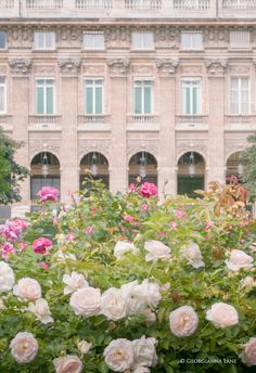 Jardin du Palais Royal, Paris~Via Phyllis Martin <3