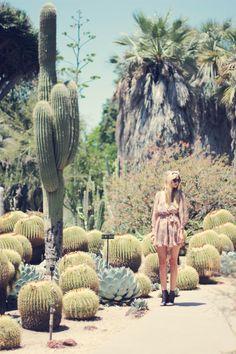 cacti garden @ botanical gardens, Huntington Library /