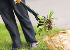 Yard and Garden: Controlling Weeds | Iowa State University Extension and Outreach yard, control weed, garden