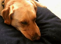 Ahhh - Rex reviews (and snoozes) on an organic, natural latex dog bed from Savvy Doggy™!