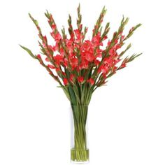 These are some of the most beautiful red gladiolas you have ever seen. Your guests will mistake them for real in the faux water they are placed in.  Silk-like high quality gladiolas