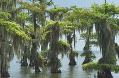 Bayou Photo Louisiana Swamp   ... mansion louisiana swamp louisiana mansions biloxi mississippi bernard
