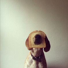 MADDIE THE COONHOUND  a super serious project about dogs and physics #pets #animals #photography