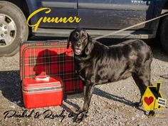 GUNNER...PITTSBURGH, PA...PetHarbor.com: Animal Shelter adopt a pet; dogs, cats, puppies, kittens! Humane Society, SPCA. Lost & Found.