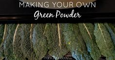 Green powders are a great way to get your daily dose of greens, and making your own is so simple! Learn how to make and use your own green powder.