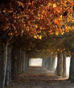 Tree Path in Autumn