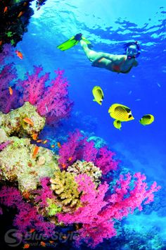 Hurghada adventur, snorkeling maui, coral reef, travel bucket, snorkeling hawaii, place, bucket lists, snorkeling in florida, bermuda snorkeling