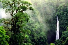 Stunning, right? See how the Rainforest Alliance is working to protect forests...