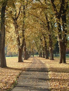 Corvallis Oregon, Oregon State University. This was the favorite part of my walk between home and campus. By Dwayne Robinson on Flickr.