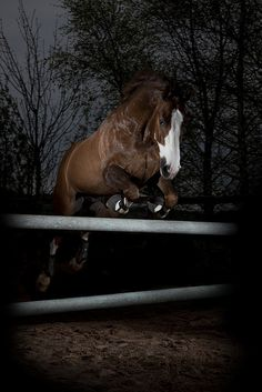 Wow, this is an AWESOME photo. Beautiful horse jumping by itself in moonlight after dusk.