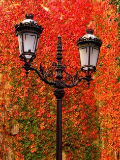 *ORANGE ~ Autumn
