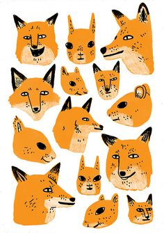 fox fox fox and more foxes