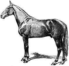 **FREE ViNTaGE DiGiTaL STaMPS**: Free Vintage Digital Stamp - Wonderful Horse
