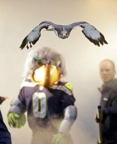 Blitz watches Seattle Seahawks augur hawk mascot fly onto the field before the game. Go Hawks!