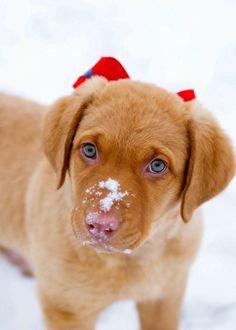 dog photos, little puppies, christmas presents, christma puppi, christmas morning, christmas bows, amin, eye, christmas gifts
