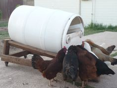 Black Soldier Fly Composter / Automatic Chicken Feeder