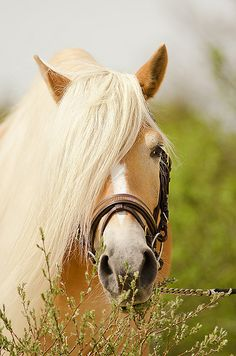 Another beautiful horse...