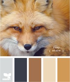 think I may repaint our doors and shudder to go with this theme. Our home is the center color - which I don't care for but can't afford to change. Maybe Navy an Tan accents?
