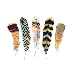 Feather Art - Archival Print - Watercolor Feathers - Nature Art. $28.00, via Etsy.