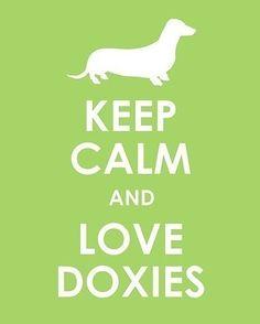 dachshund, pet, doxie, keepcalm, weiner dogs