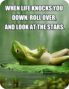 roll, daily quotes, dreams, star, happy happy happy, inspirational quotes, gods creation, frogs, angels