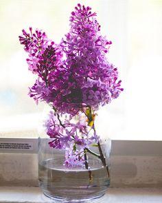 spring flowers, dream fierc, purple flowers