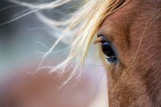 poni, anim, horses, countri life, creatur