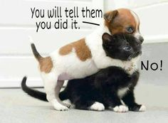 Humour quotes, funny jokes, jokes funny, hilarious funny …For the best humour and hilarious jokes visit www.bestfunnyjokes4u.com/lol-funny-cat-pic/ Funny Animals, Funny Dogs, Animal Jokes, Anim Pictur, Funny Cats, Funny Dog Pics, Dog Cat, Funny Quotes, Funny Animal Quotes