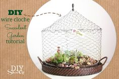 DIY Wire Cloche Succulent Terrarium