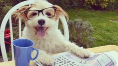 Meet Ginny, the happiest dog on the Internet | MNN - Mother Nature Network