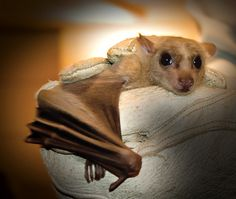 always wanted a bat and this picture doesn't make it any easier.