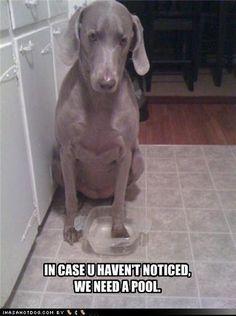 funny animals :)