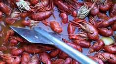 It's Crawfish Time!!! Have you had any mud bugs yet this year?
