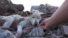 A Homeless Dog Living In a Trash Pile Gets Rescued and Then Does Something Amazing!