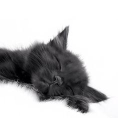 Sleepy Sleepy