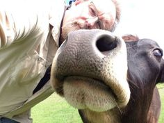 21 reasons cows are awesome - #18 - They are one of the few animals who will not judge you for your selfie .