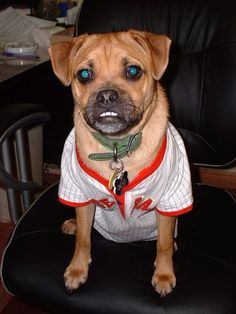 Boys baseball shirt for the Fri. night game ready dog.