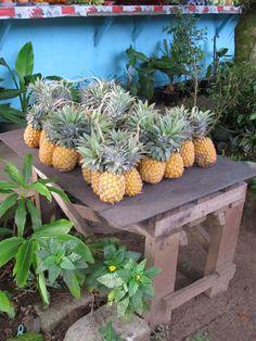 Let's Get Tropical!!! #DAREYOURSELF