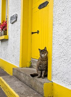 Irish doorway, Galway Bay, Ireland, Yellow door, window box, brown tabby cat.