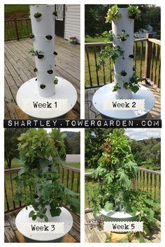 My first aeroponic tower garden!!!