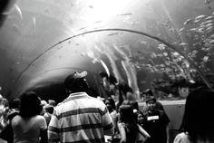 Come visit the the world's largest aquarium--the Georgia Aquarium! Check out the Ocean Voyager tunnel  www.georgiaaquarium.org   www.georgiaaquarium.com