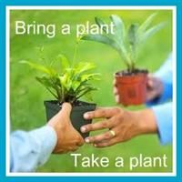 Always wanted to host a plant swap party. . .