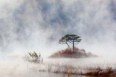 A finetree by Jason Koo, via 500px